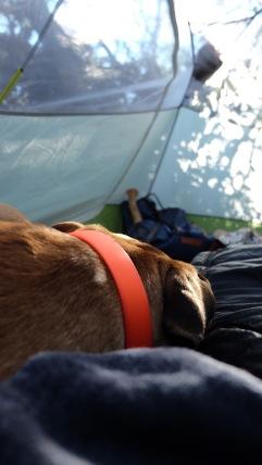 sparrow-backyard-camping-2