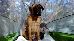sparrow-backyard-camping-3
