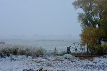 First Snow of Fall